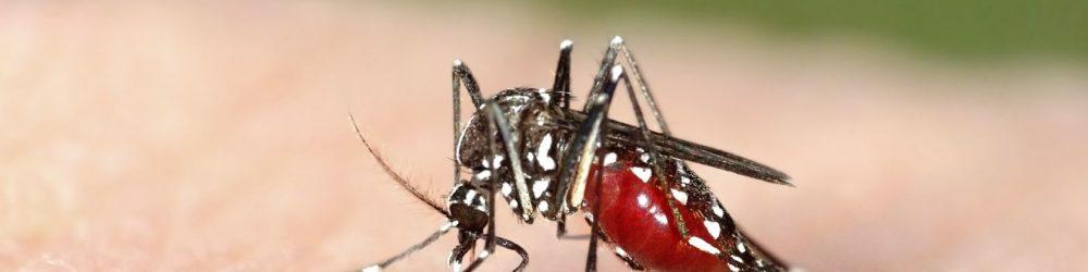 Miami: Zika-Virus breitet sich auf US-Festland aus